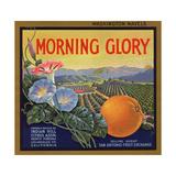 Morning Glory Brand - Pomona  California - Citrus Crate Label