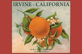 Irvine  California - Fruit Company Orange Label - Citrus Crate Label