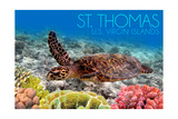St Thomas  US Virgin Islands - Sea Turtle and Coral