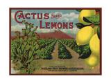 Cactus Brand - Highland  California - Citrus Crate Label