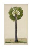 Palinyra Tree  1800-10