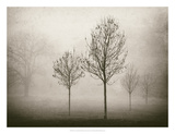 Trees in Fog VII