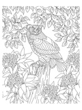 Forest Owl Coloring Art Poster à colorier