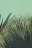 Abstrac Tropical Vintage Background Retro Toned