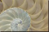 Soft Nautilus Tableau sur toile par Sparx Studio