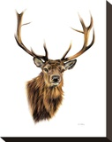 Stag White Background