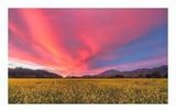 Spring Sunset Napa Valley