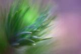 Pine Needles 5