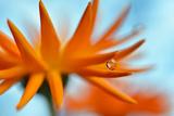 Sprawling Orange