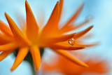 Sprawling Orange Papier Photo par Heidi Westum