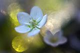 Through the Light Papier Photo par Heidi Westum