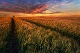 Somewhere At Sunset