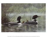 Northern Reflections - Loons