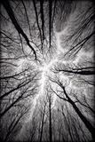 Circulatory System of the Forest Reproduction d'art par Alexandr Popovsky