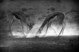 Battle in Black and White Papier Photo par Jaco Marx