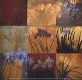 Iris Nine Patch II