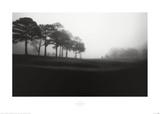 Fog Tree Study III