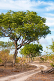 Awesome South Africa Collection - Savanna Landscape II