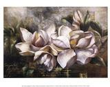 Dawning Magnolias