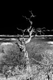 Awesome South Africa Collection B&W - Dead Tree