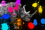 Safari Colors Pop Collection - Rhino II