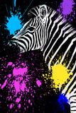 Safari Colors Pop Collection - Zebra III
