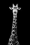 Safari Profile Collection - Giraffe Black Edition VIII Papier Photo par Philippe Hugonnard