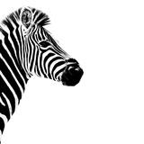 Safari Profile Collection - Zebra Portrait White Edition III Papier Photo par Philippe Hugonnard