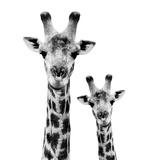 Safari Profile Collection - Portrait of Giraffe and Baby White Edition II Papier Photo par Philippe Hugonnard