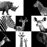 Safari Profile Collection Papier Photo par Philippe Hugonnard