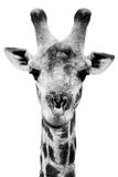 Safari Profile Collection - Portrait of Giraffe White Edition V Papier Photo par Philippe Hugonnard