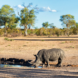 Awesome South Africa Collection Square - Rhinoceros in Savanna Landscape at Sunset