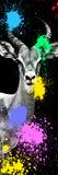Safari Colors Pop Collection - Antelope Impala Portrait III Giclée par Philippe Hugonnard