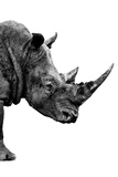 Safari Profile Collection - Rhino White Edition IV
