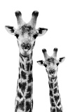 Safari Profile Collection - Portrait of Giraffe and Baby White Edition IV Papier Photo par Philippe Hugonnard