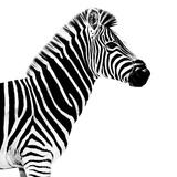 Safari Profile Collection - Zebra White Edition II Papier Photo par Philippe Hugonnard