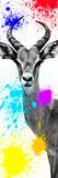 Safari Colors Pop Collection - Antelope Impala II Giclée par Philippe Hugonnard
