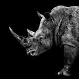 Safari Profile Collection - Rhino Black Edition II