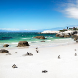 Awesome South Africa Collection Square - Colony of Penguins II