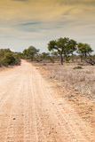 Awesome South Africa Collection - Road in the African Savannah I