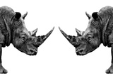 Safari Profile Collection - Rhinos Face to Face White Edition