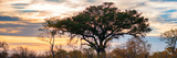 Awesome South Africa Collection Panoramic - Savannah Sunrise