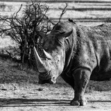 Awesome South Africa Collection Square - Portrait of a Rhinoceros