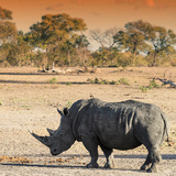 Awesome South Africa Collection Square - Rhinoceros in Savanna at Sunset