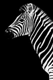 Safari Profile Collection - Zebra Black Edition III