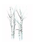 Aquarelle Birches I Reproduction d'art par Grace Popp