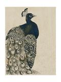 Textured Peacock I Reproduction d'art par Grace Popp