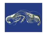Shrimps On Blue Reproduction d'art par Fab Funky