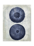 Indigo Blue Sea Urchins b