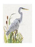 Waterbirds & Cattails I Reproduction d'art par Naomi McCavitt
